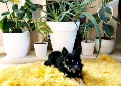 Living room - Plants- Small dog - Decorating