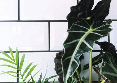 Kitchen- Plants - Decorating