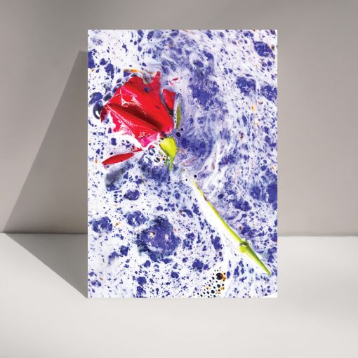 Rose bomb - blank greetings card