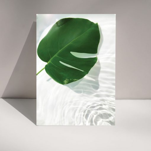 Monstera cheese plant leaf floating on water